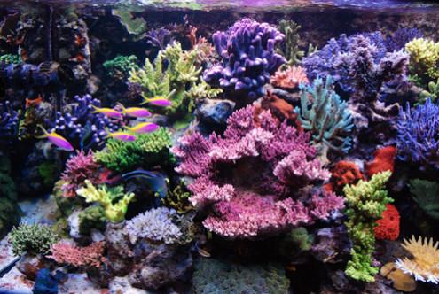 Akwarium miesiąca na Reef Central