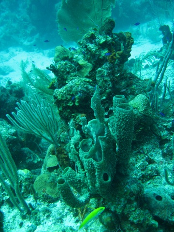 Coral Reefs in danger from US Senators?! Jeff Greene's Reef-Yacht-Disaster