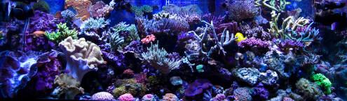 Reefkeeping December