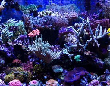 Reefkeeping Magazine - Akwarium miesiąca