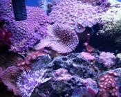 Szczecińska wystawa otwarta krewetek i nano akwariów