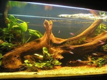 Włanoręczne przygotowanie drewna do akwarium